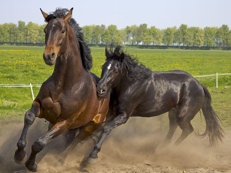 Jeździectwo konne – dyscypliny sportowe